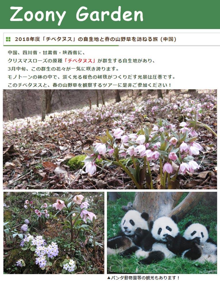 2018年3月11~17日(7日間) 「チベタヌス」の自生地と春の山野草を訪ねる旅 (中国) Zoony Garden ズーニィ・ガーデン