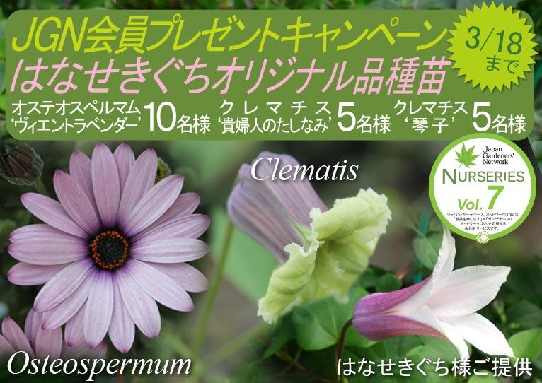 2018年3月1~18日 これからご入会の方も応募できます! JGN会員限定はなせきぐちオリジナル品種苗プレゼントキャンペーン オステオスペルマム(Osteospermum)'ヴィエントラベンダー' 10名様 クレマチス(Clematis)'貴婦人のたしなみ''琴子'各5名様 はなせきぐち様ご提供