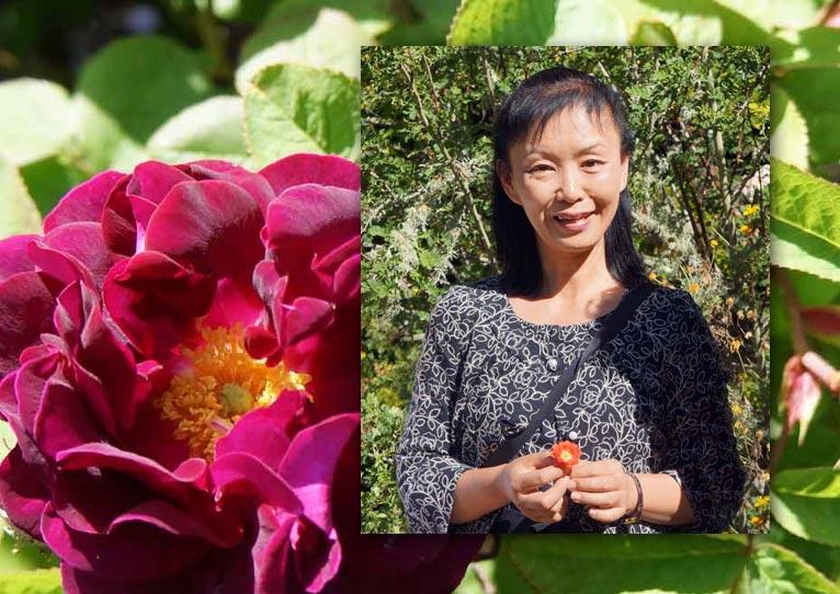 植物百般 インタビュー「ニュージーランドのバラ事情」JGN創立メンバー 御巫由紀
