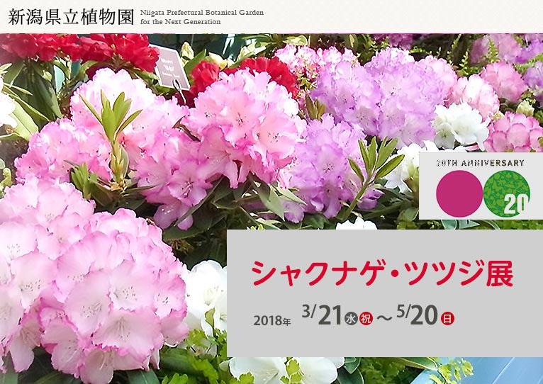 新潟県立植物園 2018年3月21日~5月20日 にいがたの花 第3部 シャクナゲ・ツツジ展