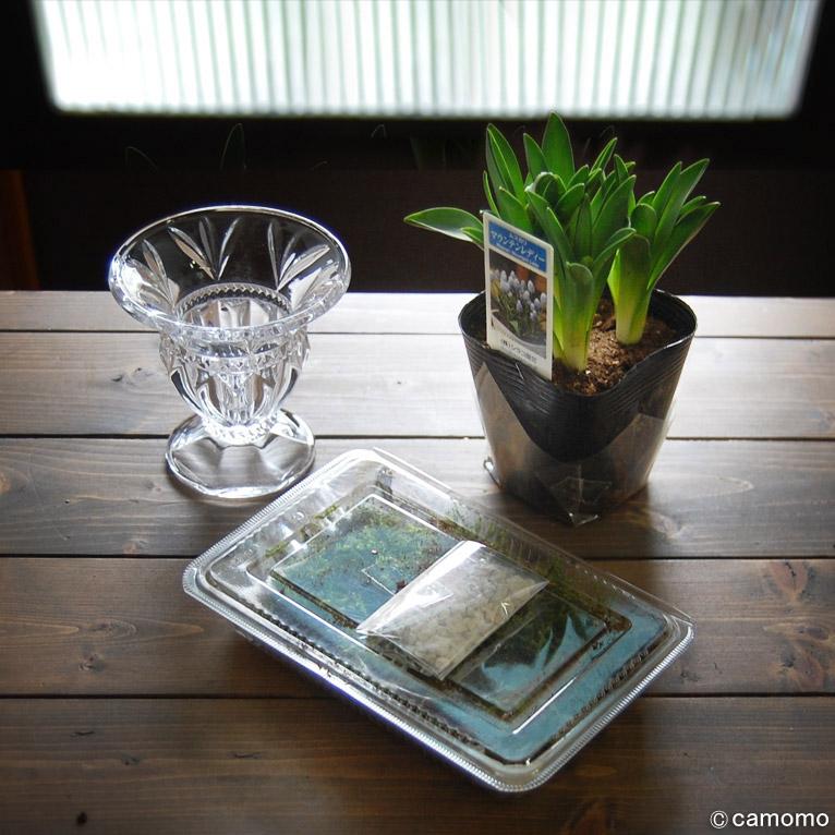 宮本里美さんのGARDENS MARKETでInterior Bulbsセット(ムスカリ)を購入して水栽培を始めました!