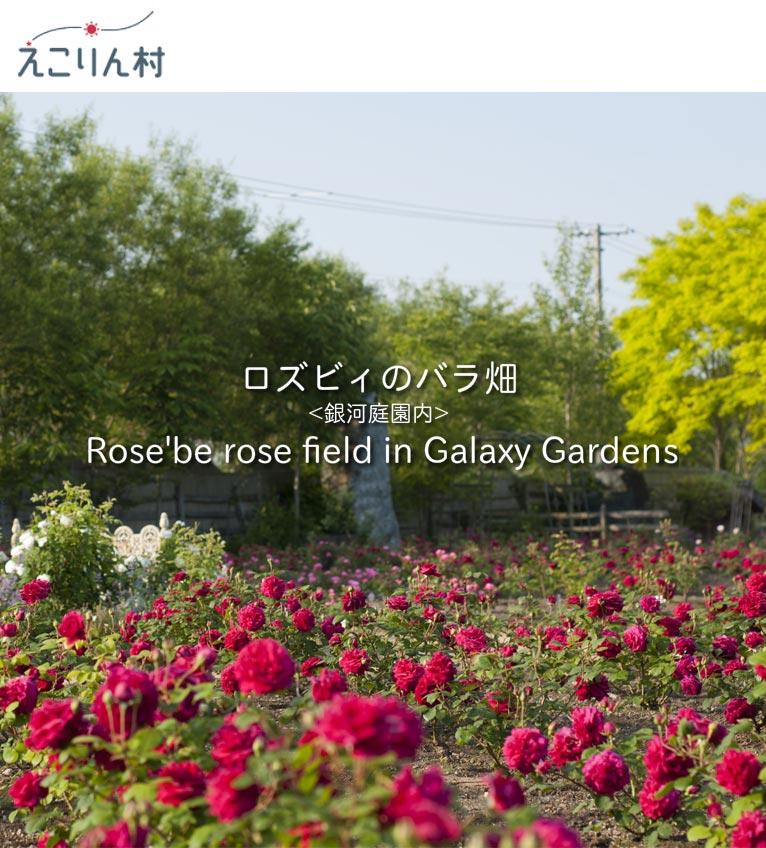 ロズビィのバラ畑 紹介ページ えこりん村 銀河庭園内