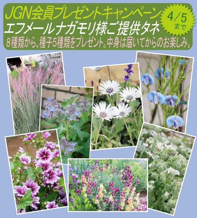 2018年3月19日~4月5日これからご入会の方も応募できます! JGN会員プレゼントキャンペーン 春播き、秋播きどちらもOK! 8種類の中から、種子5種類を10名様に エフメールナガモリ様ご提供