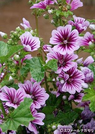 2018年3月19日~4月5日 これからご入会の方も応募できます! JGN会員プレゼントキャンペーン 春播き、秋播きどちらもOK! 8種類の中から、種子5種類を10名様に エフメールナガモリ様ご提供