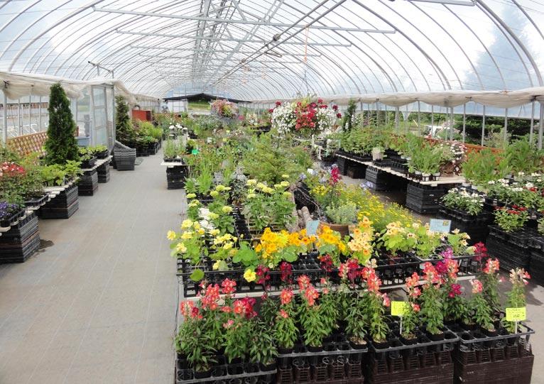 NURSERIES vol.14 ガーデンプランツ工藤 直販ハウスは、さまざまな植物でいっぱい
