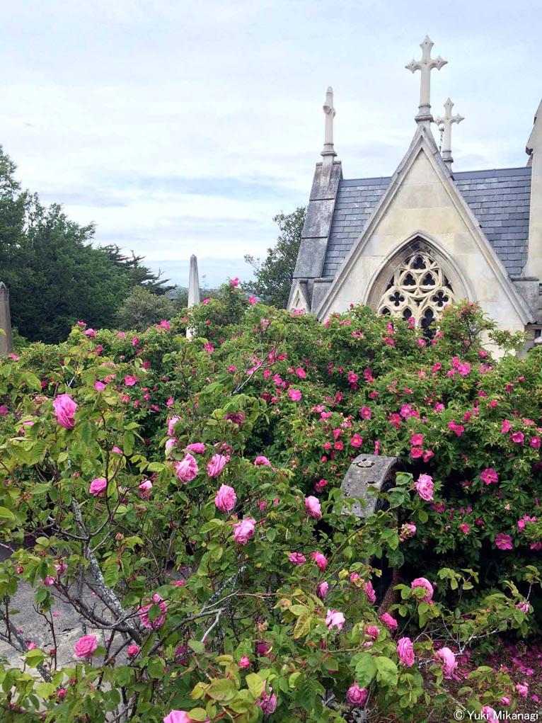 植物百般 インタビュー「ニュージーランドのバラ事情」JGN創立メンバー千葉県立中央博物館主任上席研究員/生物多様性センター 御巫由紀 一見、墓地とは思えない