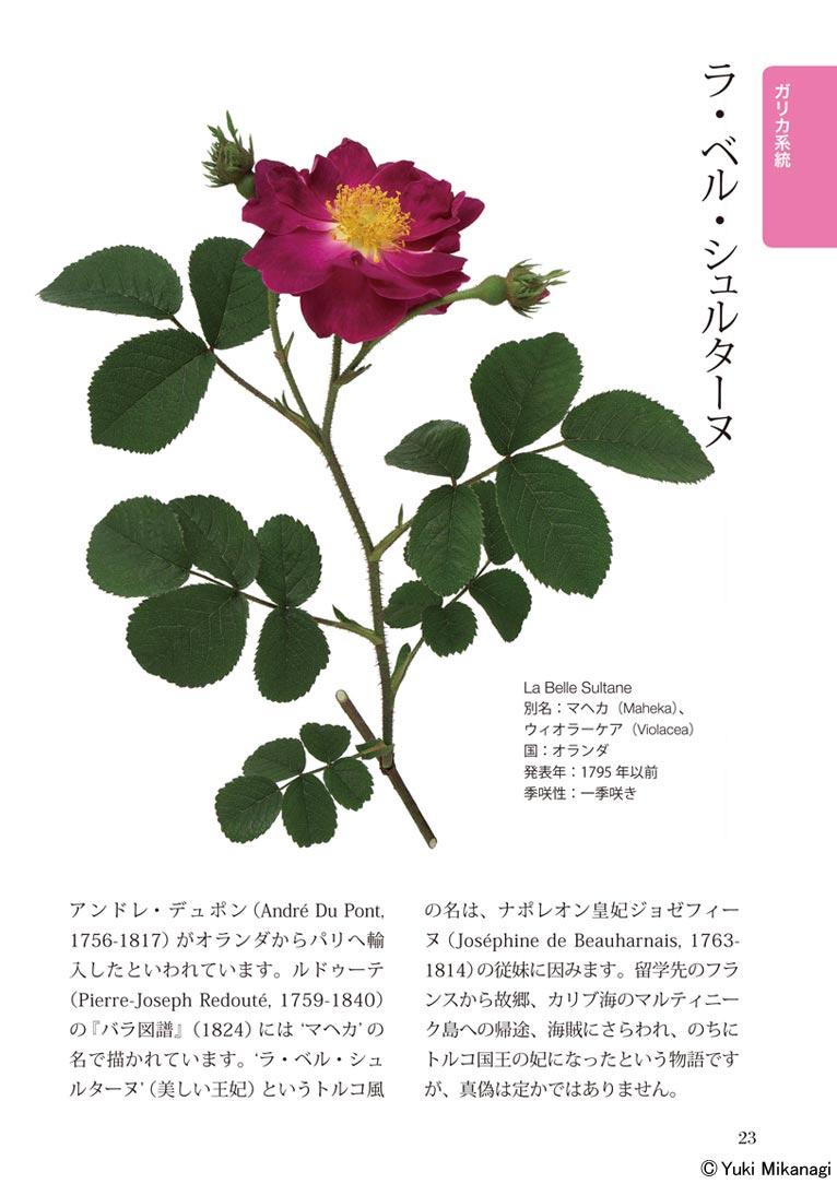 魅惑のオールドローズ図鑑 ~写真が語る伝統のバラ100の物語~ 監修・文:御巫由紀 写真:大作晃一