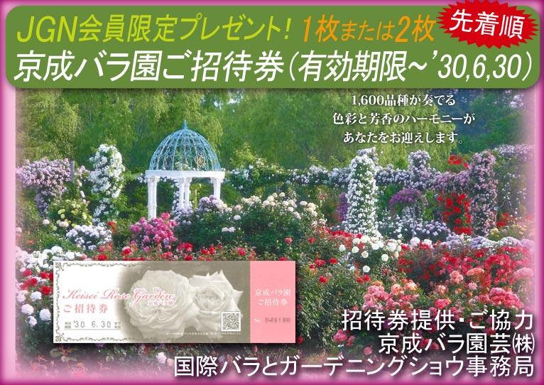 2018年5月7~24日 先着順にプレゼント!京成バラ園 京成バラ園 招待券1枚または2枚プレゼント