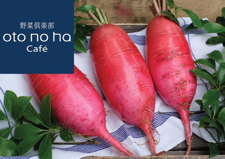 ~2018年6月30日 旬の野菜 販売中『今回のおススメ 茜(あかね)大根(だいこん)』 野菜倶楽部 oto no ha Café(オトノハカフェ)