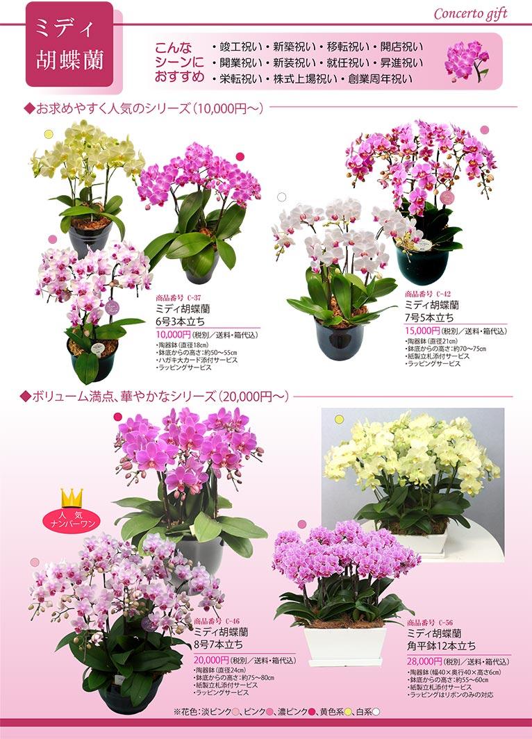 【新カタログ】祝い花を贈りませんか? 株式会社コンチェルト ガーデン事業部