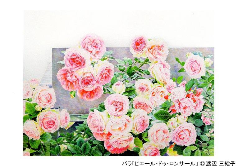 2018年6月1日に北里大学のノーベル賞を取られた大村智先生の大村コレクションに絵「ピエール・ドゥ・ロンサール」を寄贈させて頂きました。 花の水彩画 渡辺 三絵子