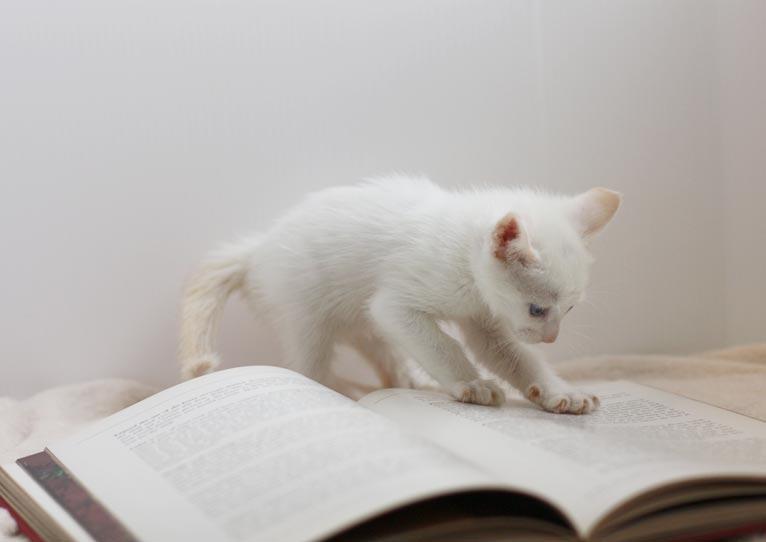 「緑陰の書架」~緑の本棚をのぞいてみませんか?~