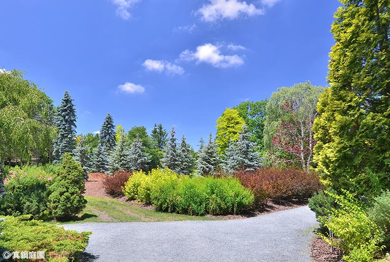 NURSERIES vol.17 真鍋庭園 庭園のさまざまな色・樹形の木々