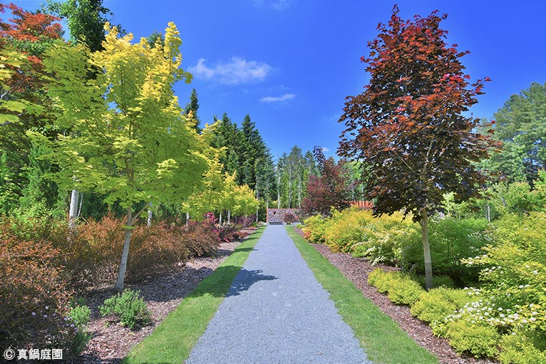 NURSERIES vol.17 真鍋庭園 葉色の対比が美しいリバースボーダーガーデン