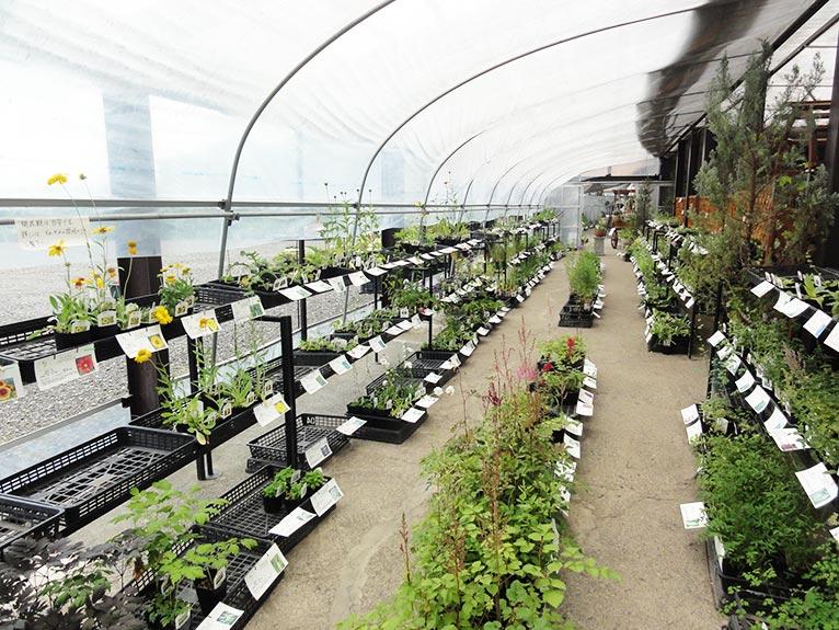 NURSERIES vol.18 大森ガーデン 豊富な種類の苗を販売しているグリーンハウス