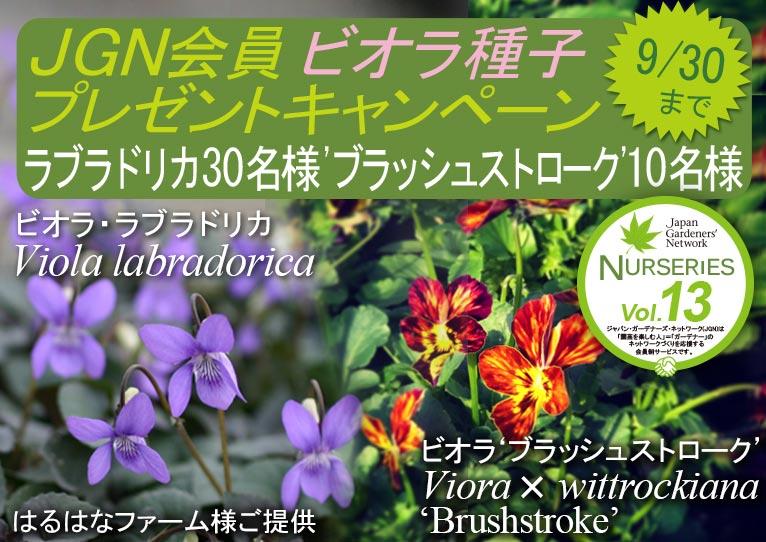 2018年9月11~30日 JGN会員限定ビオラ種プレゼントキャンペーン ビオラ・ラブラドリカ  Viola labradorica  30名様 ビオラ 'ブラッシュストローク' Viora  ✕ wittrockiana  'Brushstroke'  黄色系&紫色系のセット 10名様 はるはなファーム様ご提供