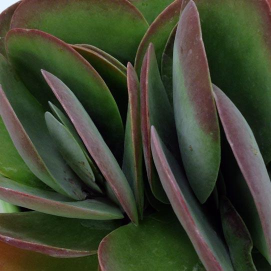 開催間近!2018年9月24日秋のサボテン・多肉植物ビッグバザール
