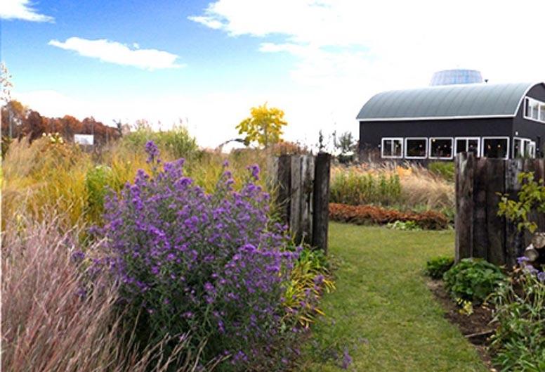 秋のガーデンを彩る宿根アスター特集!大森ガーデン