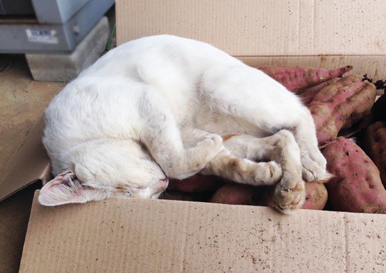 犬・猫のごはんが気になって仕事に集中できない?いいものありますよ!カリカリマシーンSP【Gadenet広告】