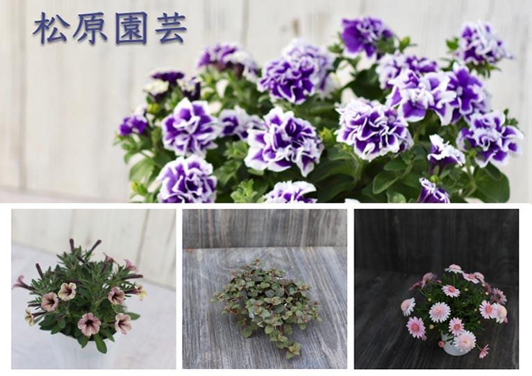 松原園芸 通販サイト