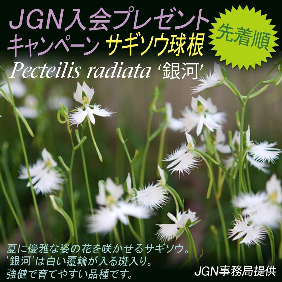 2019年1月31日~ JGN入会プレゼントキャンペーン サギソウ'銀河'球根5球