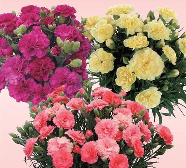 【開催概要決定!第5回ガーデニングコンテスト募集中(2/28締切)】 2019年4月19~21日 『第29回2019日本フラワー&ガーデンショウ』花を楽しみつくす~家族の笑顔はじける 花と緑のチカラ!~ 今年のテーマフラワーは「カーネーション」です パシフィコ横浜