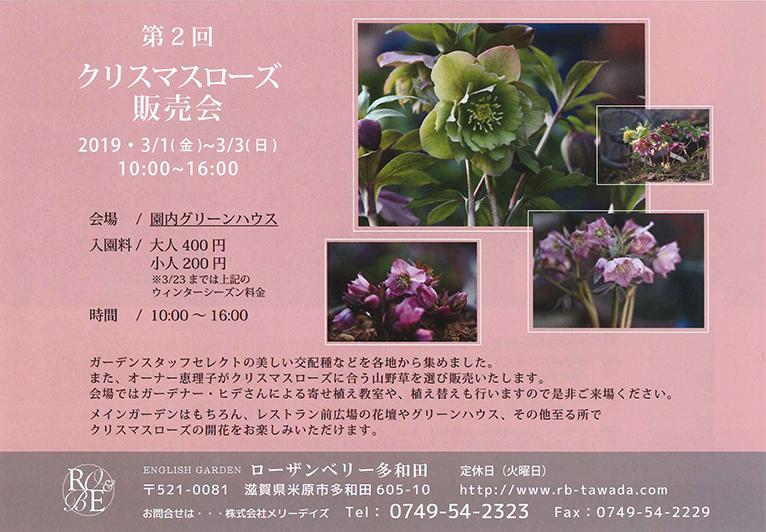 2019年3月1~3日 クリスマスローズの展示即売会 ROSE & BERRY Tawada ローザンベリー多和田