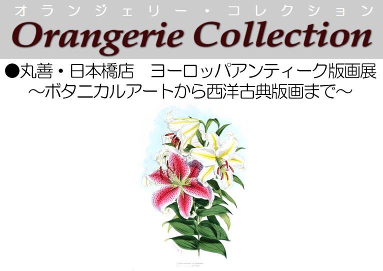 2019年6月26日~7月2日丸善・日本橋店『ヨーロッパアンティーク版画展』~ボタニカルアートから西洋古典版画まで~植物画を展示販売します! オランジェリー・コレクション