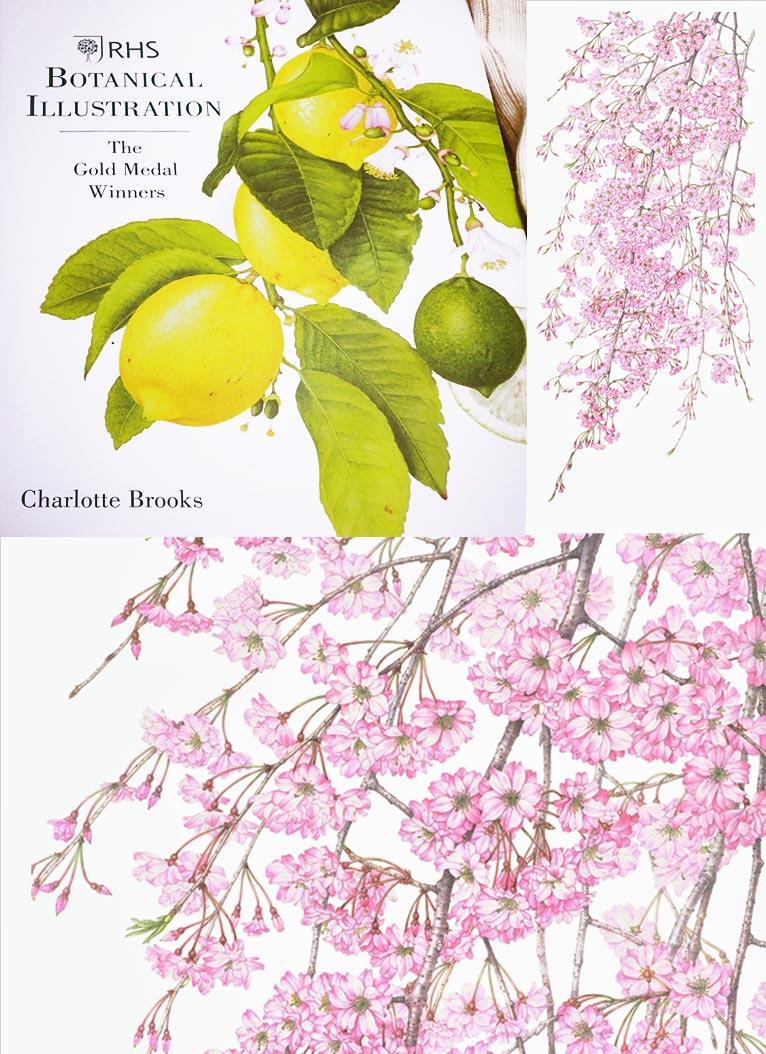 書籍『Botanical Illustration』のにボタニカルアート・コンテストでゴールドメダルを獲得した「八重紅桜」が掲載されましたJGN創立メンバー石川美枝子