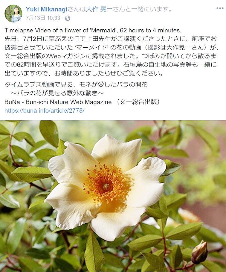 'マーメイド' の花の動画(撮影は大作晃一さん)が、文一総合出版のWebマガジンに掲載されました。つぼみが開いてから散るまでの62時間を早送りでご覧いただけます。御巫 由紀