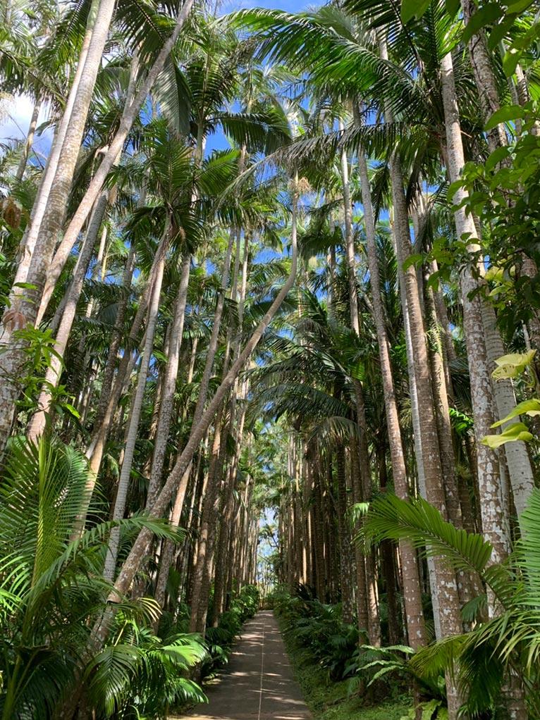 JGN事務局スタッフ 沖縄 東南植物楽園を訪れました!日本一の規模のユスラヤシの並木通り、高さは25m!