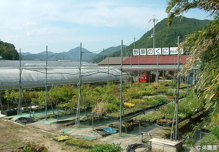 NURSERIES vol.24 伴園芸 売店には多種多様な植物たちが並んでいる