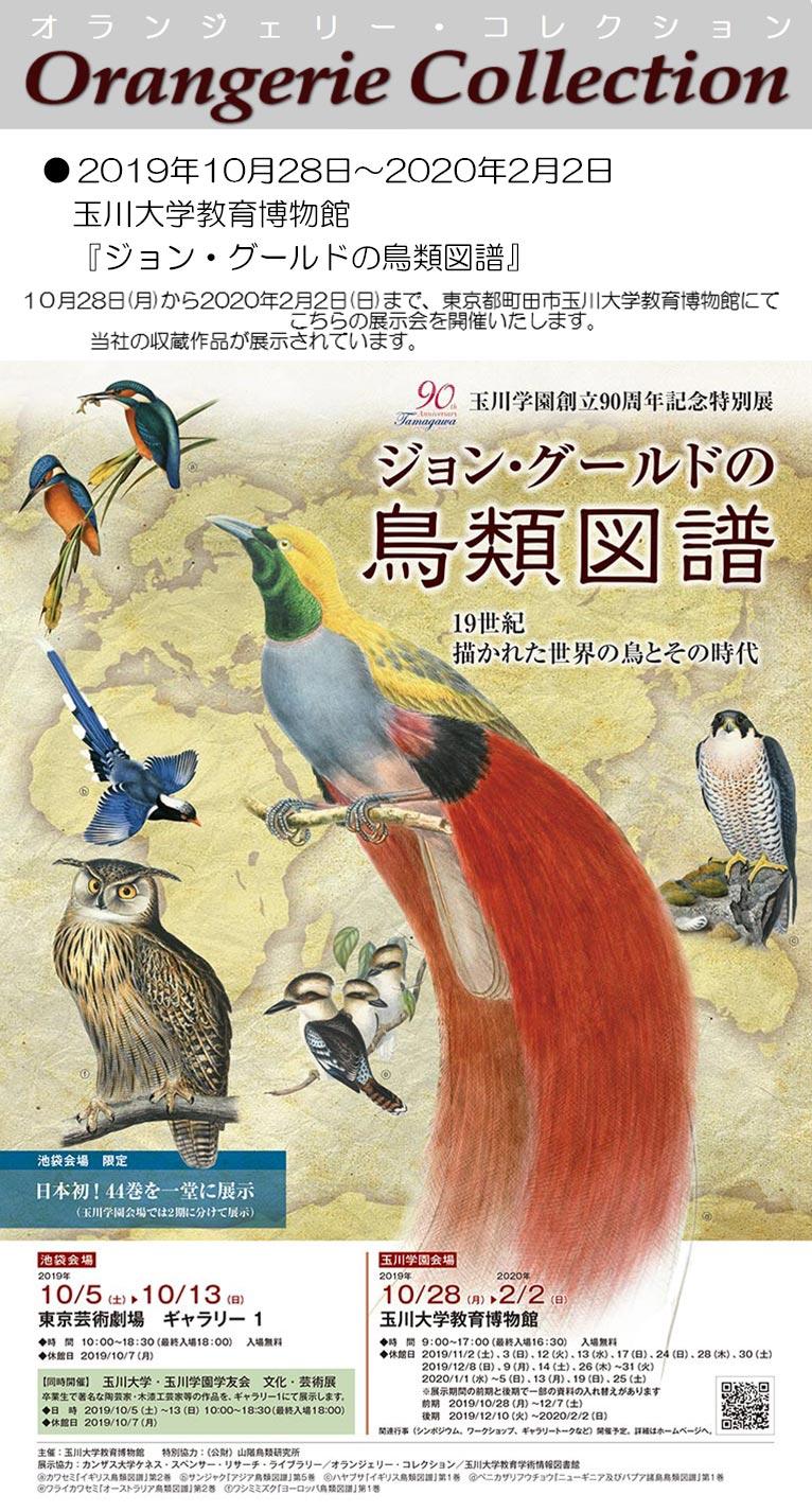 2019年10月28日~2020年2月2日玉川大学教育博物館『ジョン・グールドの鳥類図譜展』オランジェリー・コレクションの収蔵作品が展示されています。