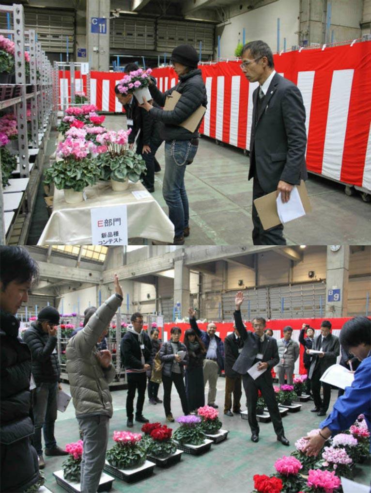 一般社団法人 日本花き生産協会主催 2019年度 第53回全国花き品評会 シクラメン部門 栃木県 MFGイッセイ花園 吉原一成さんの 'ドリームパープル'がジャパン・ガーデナーズ・ネットワーク賞を受賞されました。