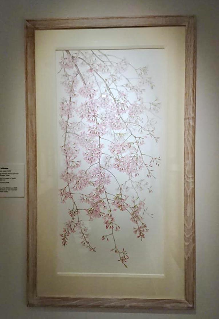 2019年11月16日~2020年3月15日Modern Masterpieces of Botanical Artシャーリー・シャーウッド・ギャラリー Kew植物園