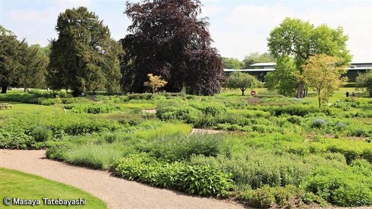 2020年6月16日~22日キューディプロマ修了舘林正也先生と行く英国ガーデンツアー英国王立園芸協会(RHS)の最新ガーデン&憧れの有名デザイナーの名庭をめぐる旅(7日間)Trentham Gardens(Piet Oudolf デザイン)