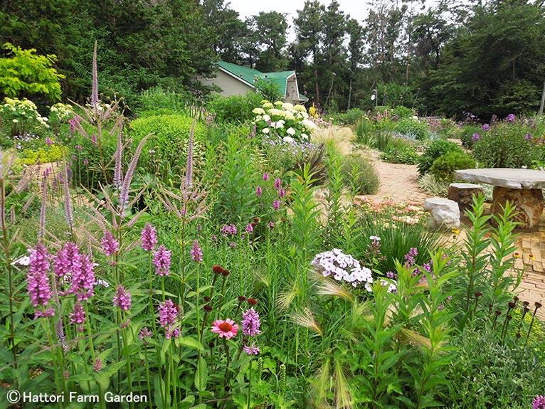 2020年6月25日 JGNスペシャル・ガーデン日帰りバスツアー(新宿発) ~作り手の愛情あふれる美しい庭 山梨・神奈川~「緑が眩しい初夏のペレニアルガーデン」Hattori Farm Gardenを貸切! JGN・池袋コミュニティ・カレッジ共催