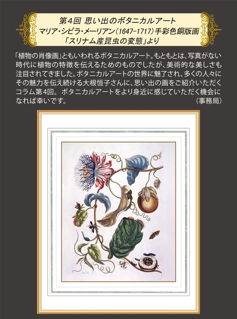 JGN NEWS LETTER 2020年春号 Vol.13(その3)第4回 思い出のボタニカルアート マリア・シビラ・メーリアン(1647-1717)手彩色銅版画「スリナム産昆虫の変態」より JGN創立メンバー オランジェリー・コレクション 代表 大根 恒子氏