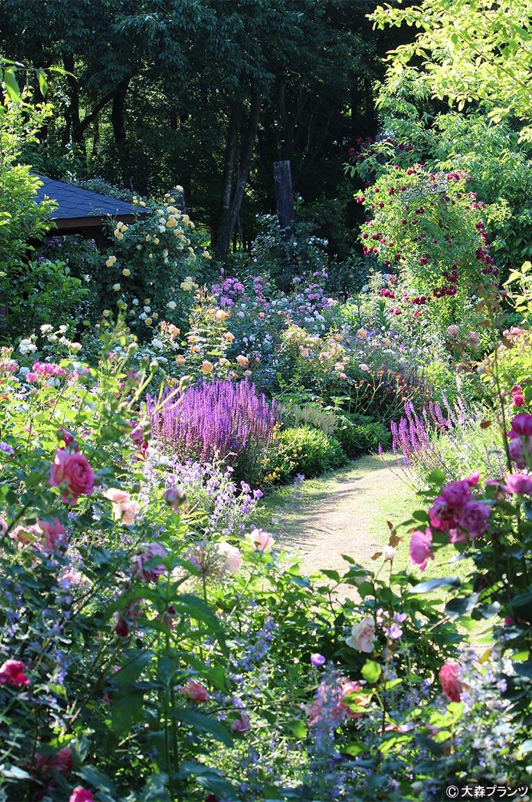 NURSERIES vol.25 大森プランツ バラと宿根草が美しいガーデン