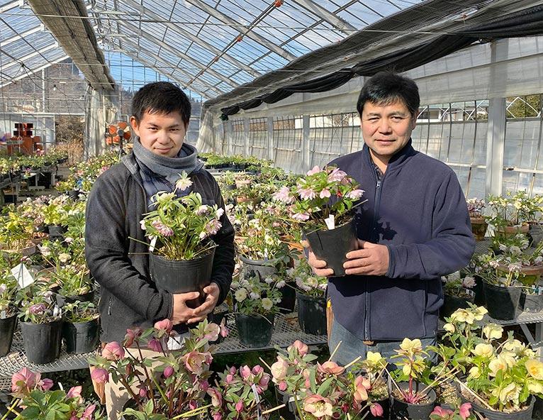 NURSERIES vol.26 掘切園 樋口規夫さん(右)と尚貴さん(左)親株が開花するハウス内にて