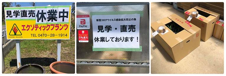 Gadenet(ガデネット)エクゾティックプランツ紹介ページ 見学・直売休業中