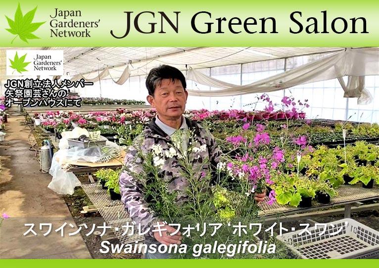 【JGN グリーンサロン】JGN創立法人メンバー矢祭園芸金澤美浩さんおススメの新顔 スワインソナ・ガレギフォリアのピンク花