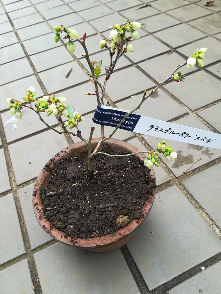 2019年12月26日~2020年1月26日 JGN会員限定プレゼント! これからご入会の方もご応募いただけます! ちょっと珍しい樹木を育ててみませんか?第1弾テラスブルーベリーを2名様にご提供:金華園様 当選の会員様よりお写真とコメントをいただきました!