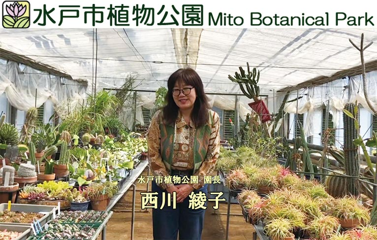 西川綾子園長の部屋が新しくなりました! 水戸市植物公園