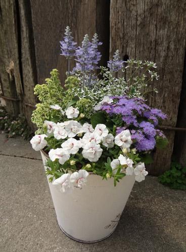 5月28日の東海テレビ『スイッチ!』寄せ植えづくりにチャレンジ花遊庭 豊田ガーデン