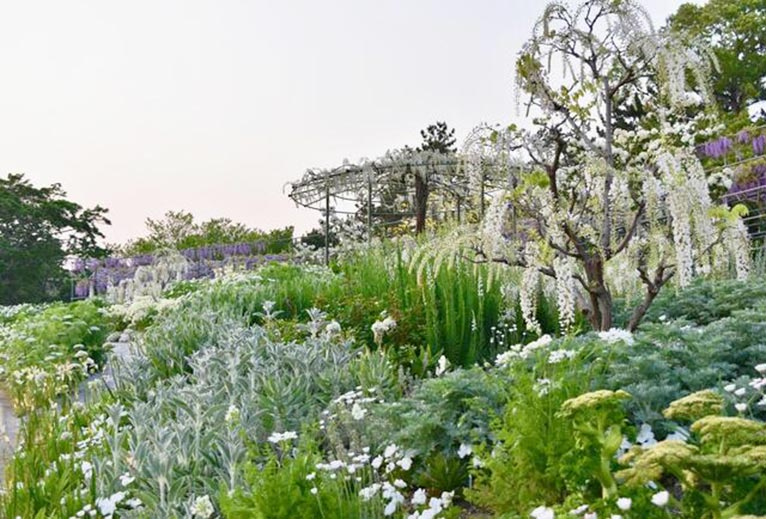 写真だけでも...@はままつフラワーパーク2020 吉谷桂子のガーデンダイアリー ~花と緑と豊かに暮らすガーデニング手帖~