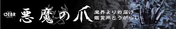 株式会社ゲブラナガトヨ 紹介ページ