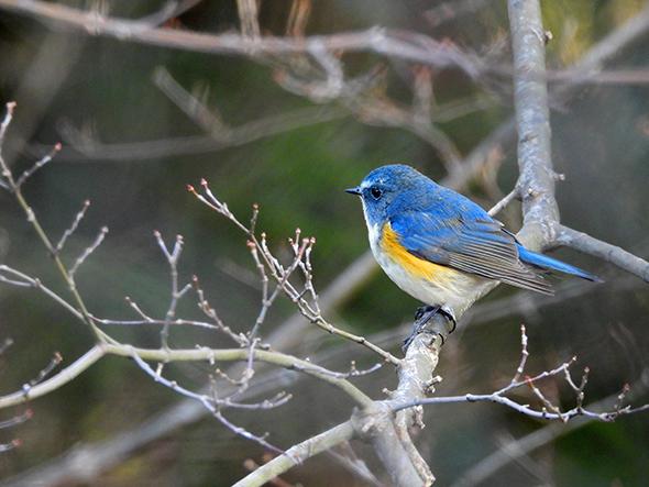 赤城自然園森の恵みを活用した体験プログラム 大人の野鳥観察会【要予約】