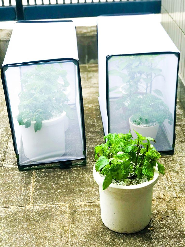 『へなちょこ野菜栽培者の日記』キトハ 株式会社喜芳園