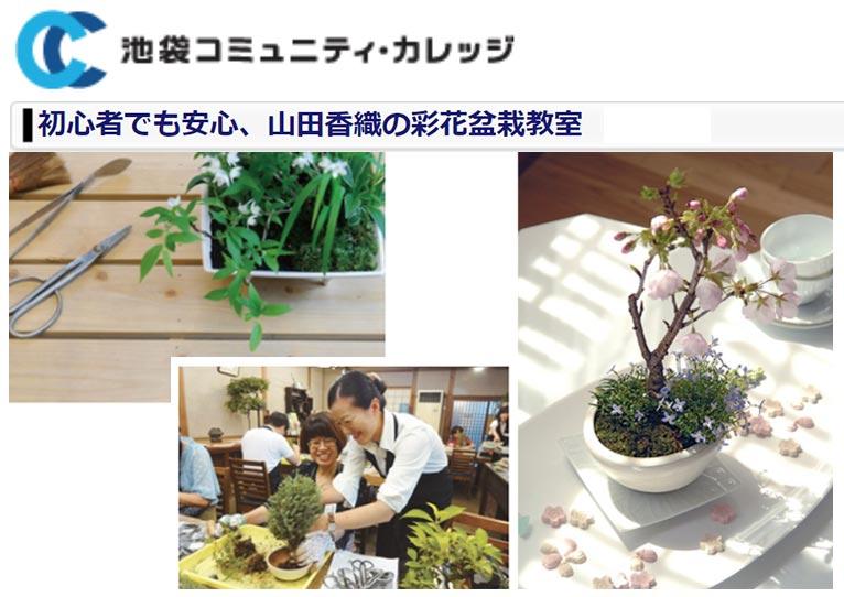 2020年11月8日~ 初心者でも安心、山田香織の彩花盆栽教室 池袋コミュニティ・カレッジ